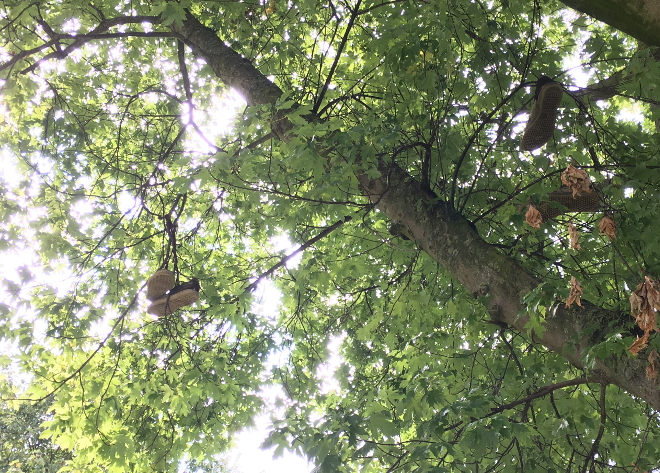 Shoes in tree cr Judy Darley