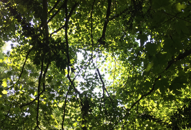 Arnos Vale light in the canopy. Photo by Judy Darley