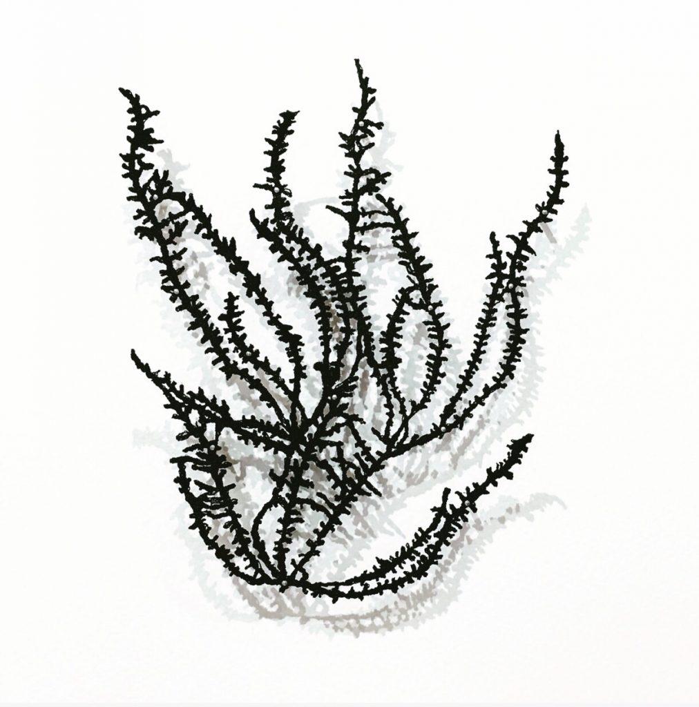 Seaweed Series by Shuya Cheng