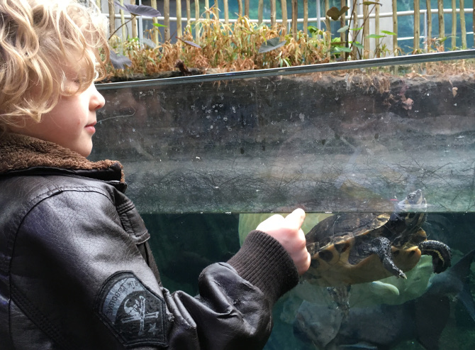 Boy meets turtle_Photo by Judy Darley