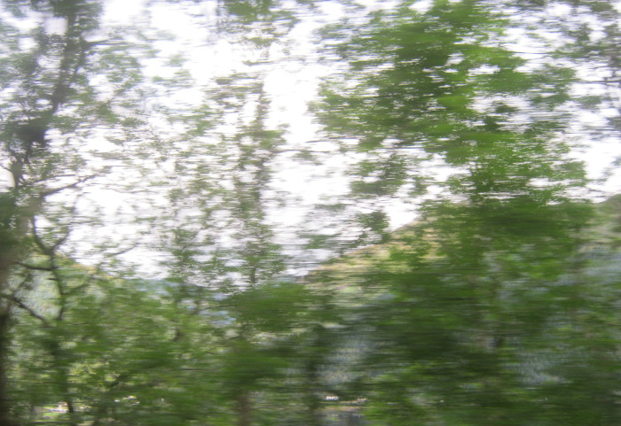 Blurry trees_Glasgow to Oban_by Judy Darley