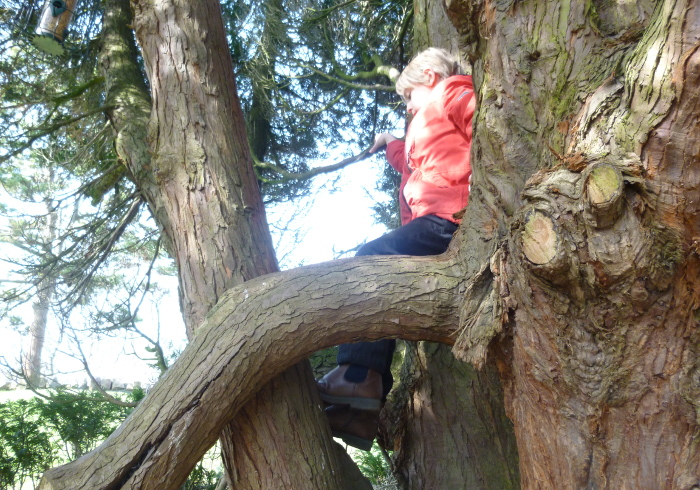 Brandon Hill, Bristol, child in tree by Judy Darley