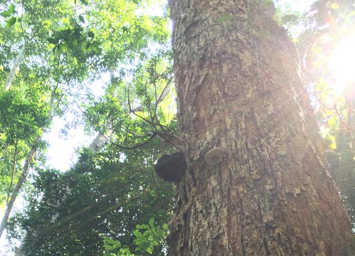 Sunlit tree by Judy Darley
