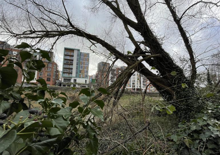 Toppled tree cr James Hainsworth