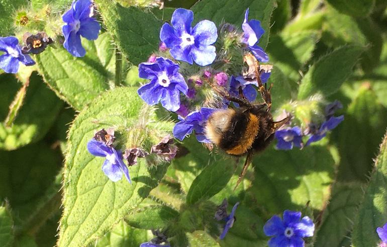 Bee on purple flowers by Judy Darley