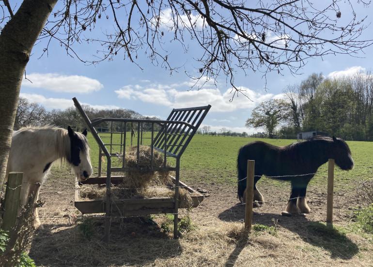 Eastwood Farm horses by Judy Darley