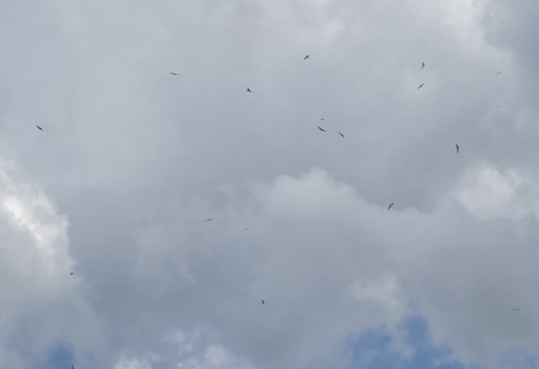 Flying Ant Day by Judy Darley. Shows gulls flying against clouds, with blue sky showing through gaps.