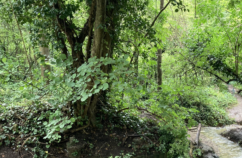 Northern Slopes stream and woodland by Judy Darley