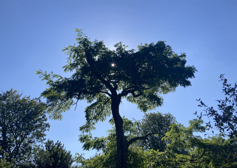 Arnos Vale star tree by Judy Darley